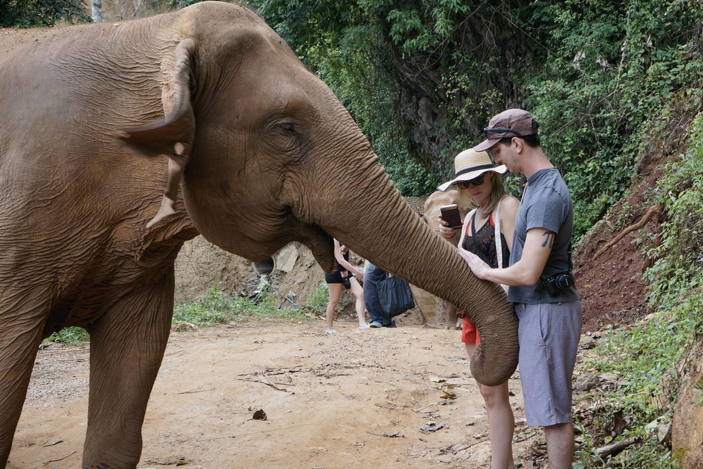 Elephant Nature Park-9661