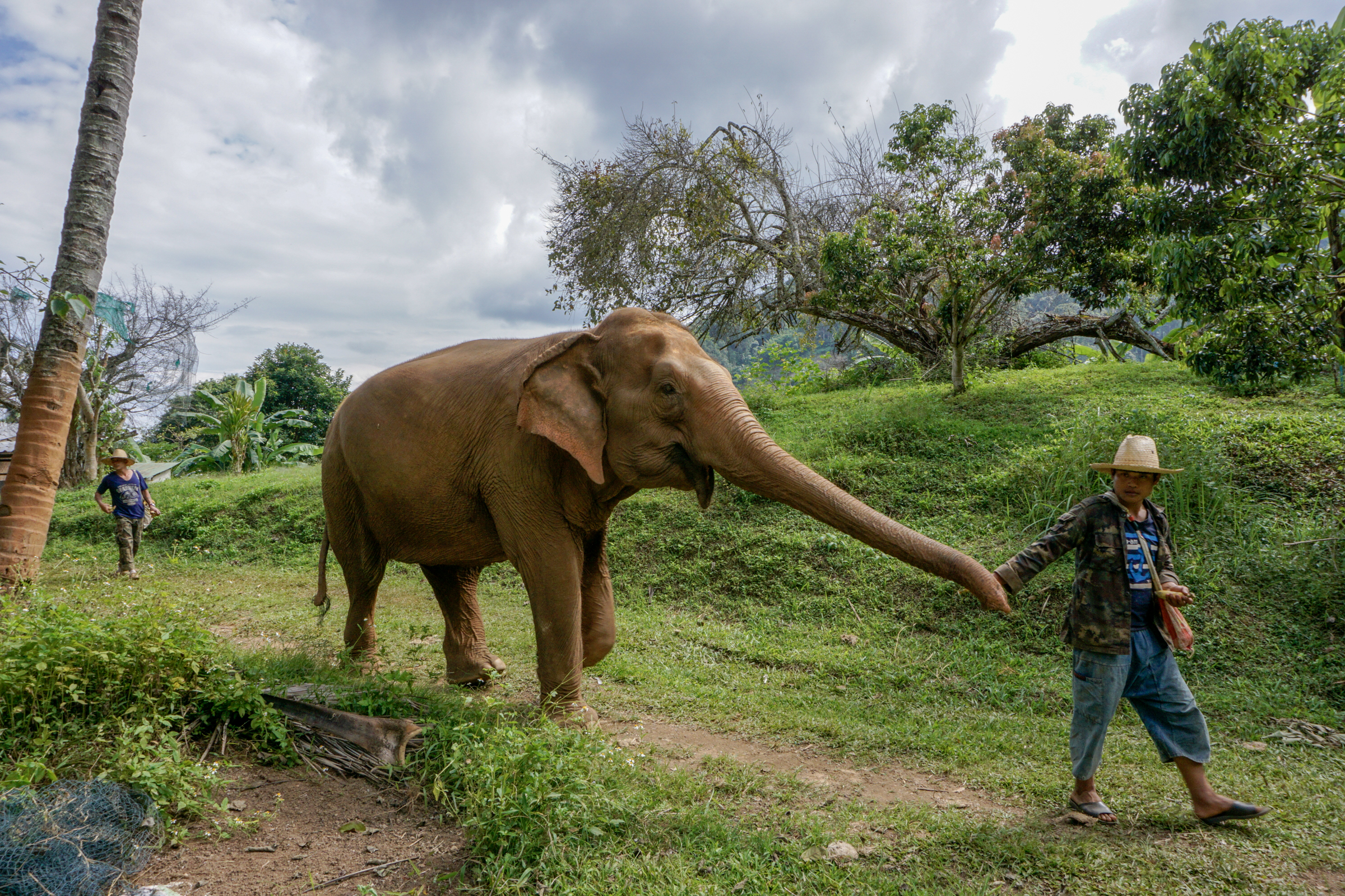 Elephant Nature Park-9740