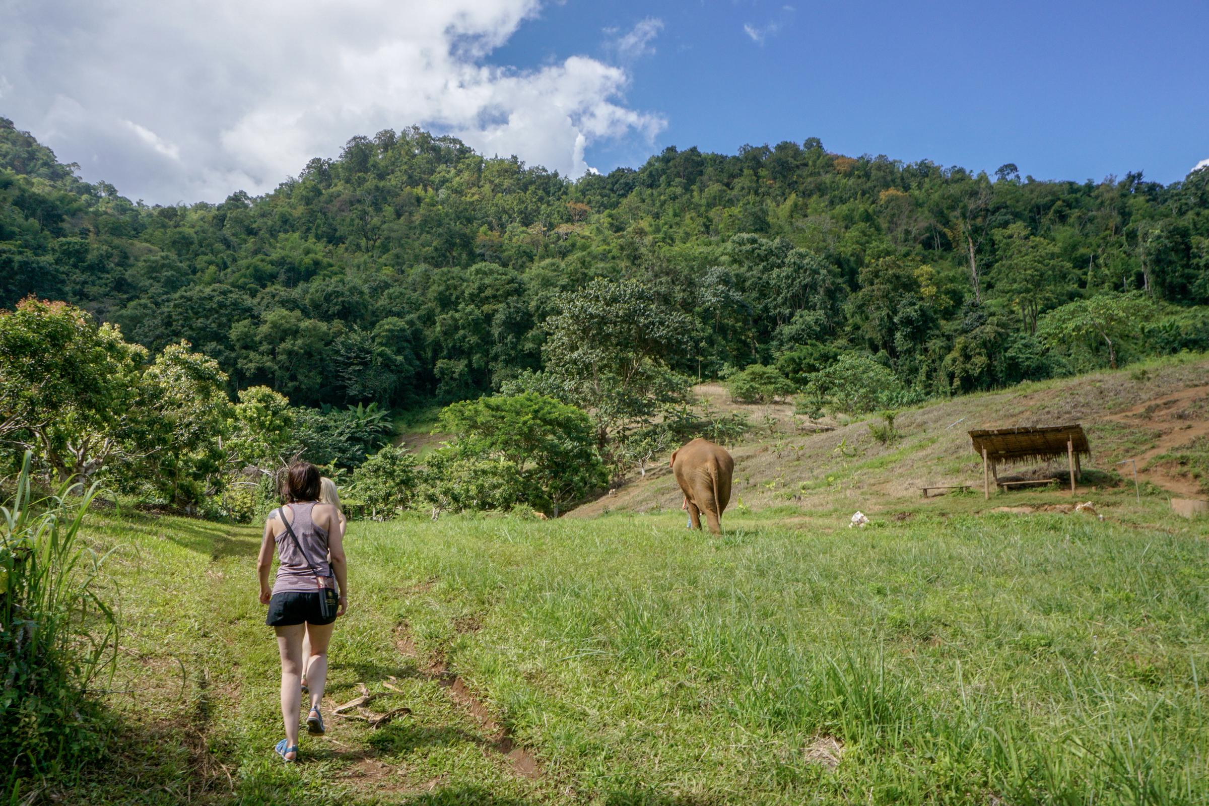 Elephant Nature Park-9745