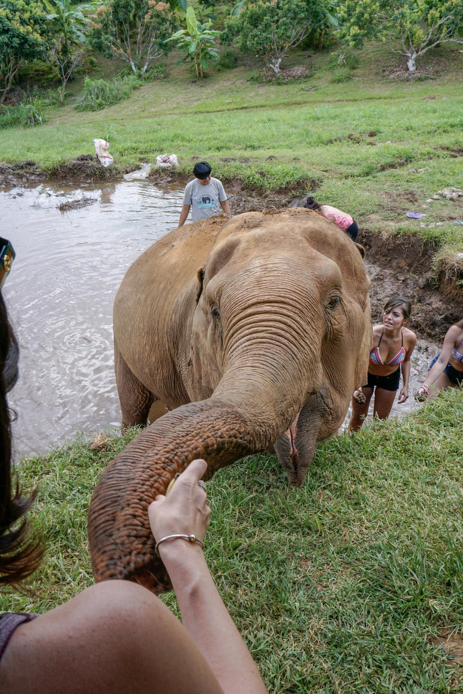 Elephant Nature Park-9765
