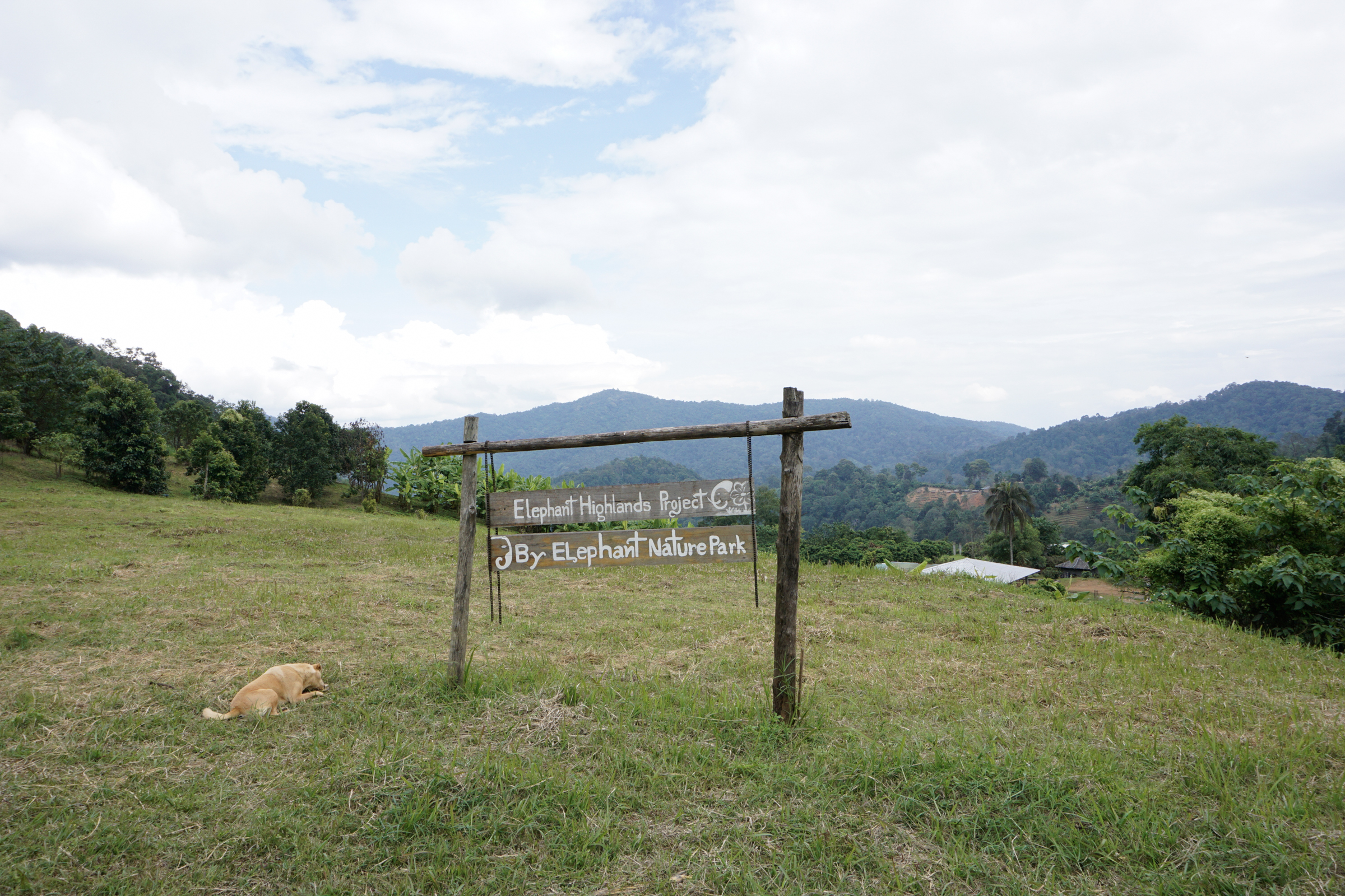 Elephant Nature Park-9789