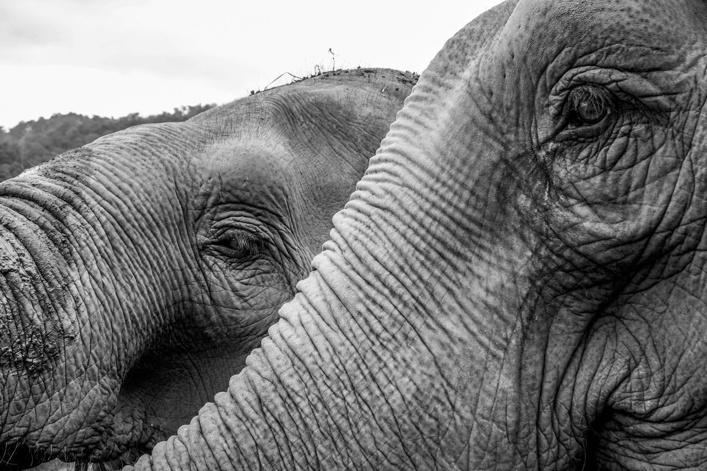 Elephant Nature Park-9803