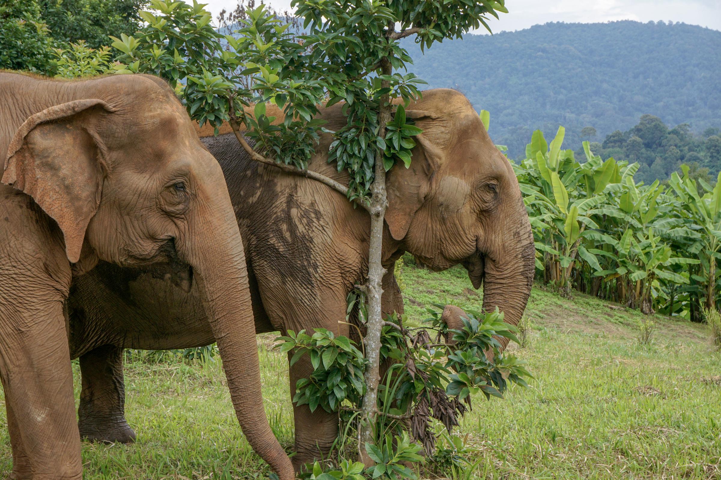 Elephant Nature Park-9824
